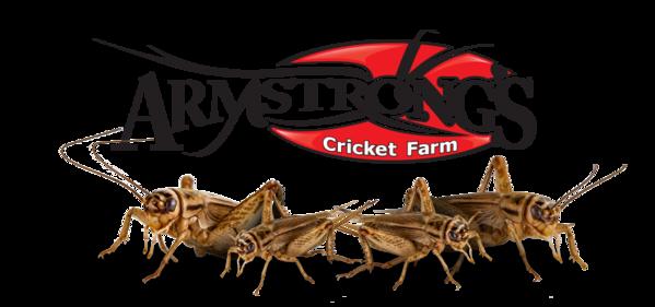 Armstrong Cricket Farm